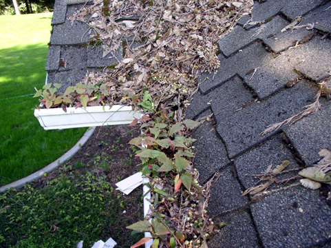 arlington gutter cleaning pic